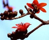 55222257-1237611908_Thang_Ba_Tay_Nguyen